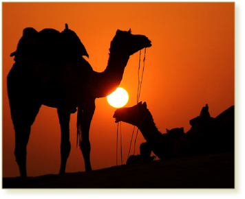 12 day Grand Morocco Tour from Casablanca